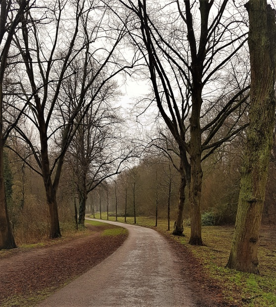 Amsterdam Bos.