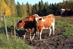 Törstiga höstkvigor 1