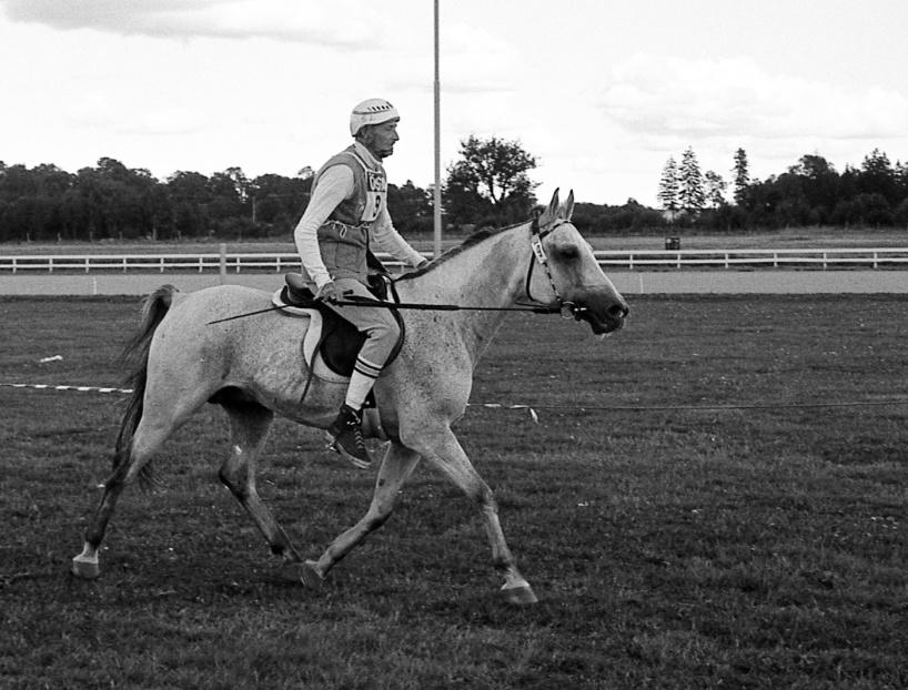 Distansryttare anno 1986. Hingsten Alfar ox och Sture Landkvist , en av vinnarna från Karolinerritten med start och mål på Axevalla travbana 1986. Foto: Ulf Lonäs.