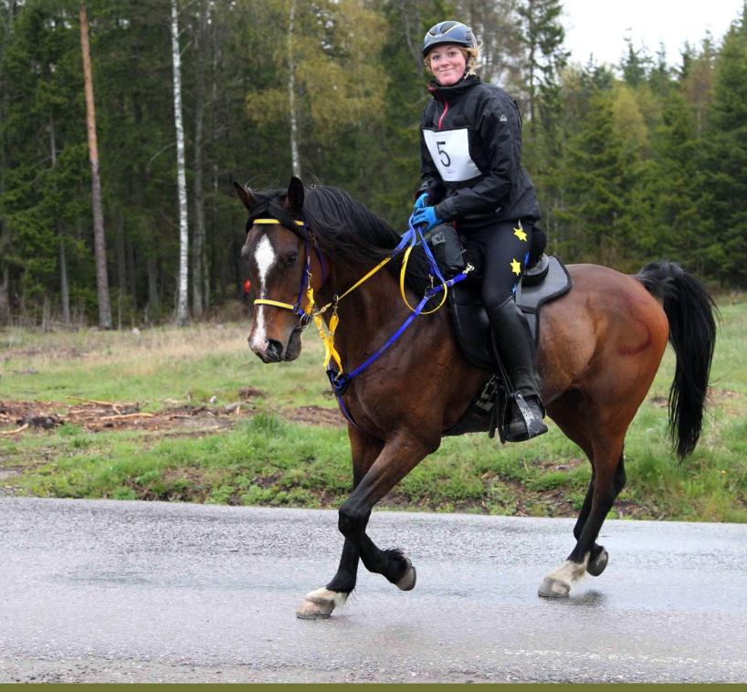 Distansryttare anno 2014. Chaman ox och Josefin Blom Lugn. Foto: Ulf Lonäs.