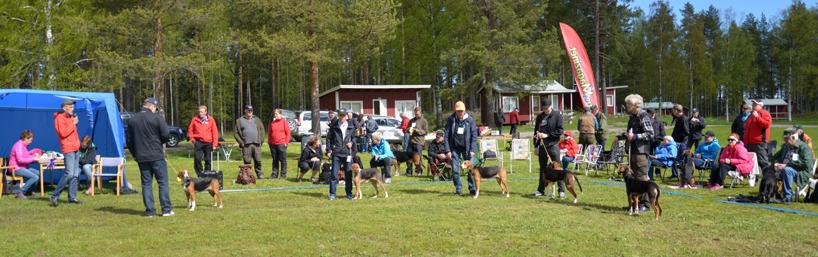 7. Hamiltontiken nyblivna SEJUCH Silva med ägaren Sigge Larsson, Luleå, fick 1:a pris i avelsklass respektive uppfödarklass.