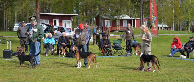 8. I en paus i bedömningen arrangerades en championparad med tyvärr bara tre deltagare. Fr v 13-årige smålandsstövaren Limedsforsens Hilmer, ägare Uno Olsson, Kalix, i mitten den 11-årige och högst meriterade stövaren i Norrbotten genom tiderna, finska stövaren SEJCH FIJCH INTUCH NORDUCH RR Kuturan Jallu, ägare Hans Djärv, Luleå. Utöver alla titlar har Jallu dessutom 15 första pris i elitklass eller motsvarande på jaktprov. Tredje hund är 5-årige hamiltonstövaren SEJUCH Liljaskogens Urax, ägare Britta Lindgren, Kåge, som var deltagare vid Stövar-SM samt klarade en bronsplats vid Europacupen i San Marino, Italien, under det senaste jaktåret.