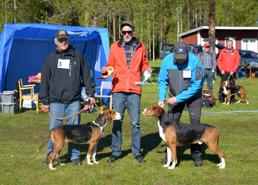 Finsk stövare BIM och BIR