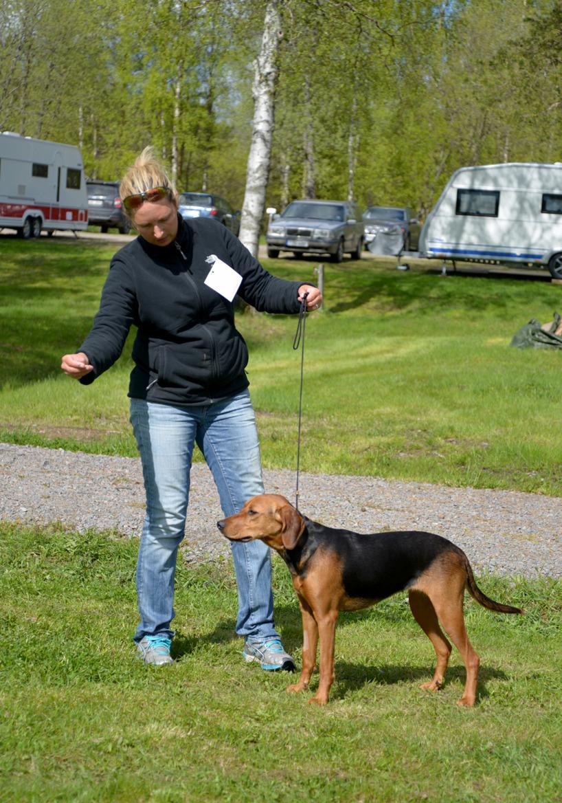 4. Juniortiken Killingnäsets Speja blev BIR i schillerrasen. Ägare Mats Vikström, Boden.