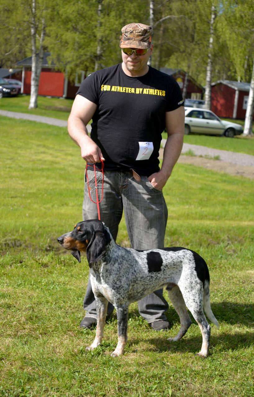 3. Luzernerstövaren Hozz var enda startande i sin ras och fick omdömet Excellent i unghundsklass. Ägare Urban Wiklund, Skellefteå.