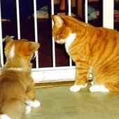 katt 12