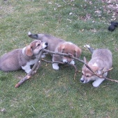 Family-stick