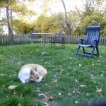 prassel i hagen