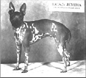 Josephines dotter Jemima