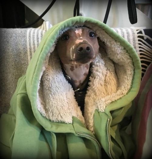 Jag fick kennelhostan på mitt dagis men börjar känna mig piggare nu :) - Milo