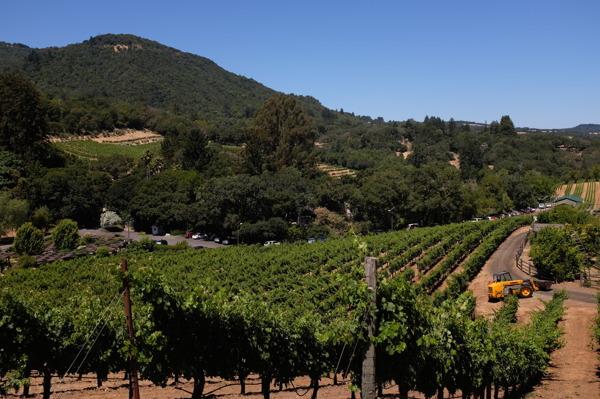 Biodynamisk vingård i Napa Valley, Kalifornien