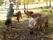 Thérèse matar sina alpackor