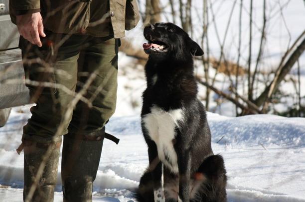 På valpkursen och unghundskursen arbetar vi med kontakt och grundläggande samarbetsövningar mellan dig och din hund.