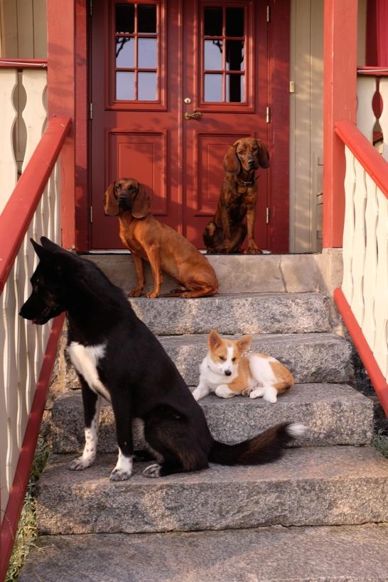 Vi har arbetande hundar anpassade  för jakt och eftersök.  Vi tränar ofta med våra hundar, och de får vara med som goda exempel när vi håller valpkurs, unghundkurs och spårkurs.
