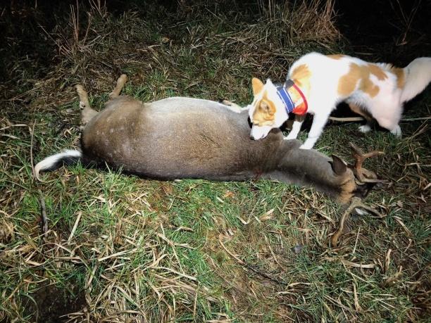 Katzi (Torrholmens be my best friend) har släppts efter både kron och dov. Hon har även varit med på eftersök.