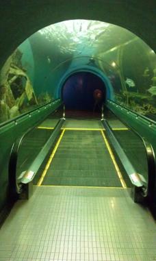 Rayong Akvarium Ban Phe