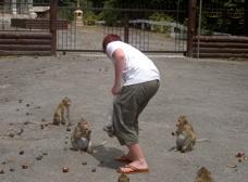 Matar apor på Apornas tempel i Ban Phe