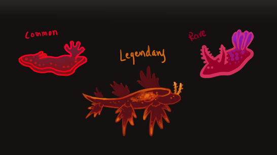 Above: Concept images of Nudibranchs.