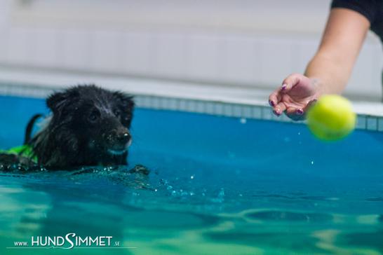 Kira och matte leker flera gånger i veckan i poolen på Hundsimmet.