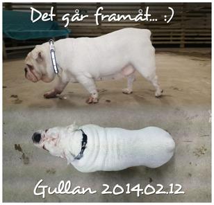 17e februari 2014 - 31 kg
