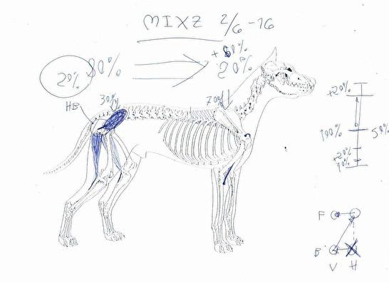 Bild från hundägaren