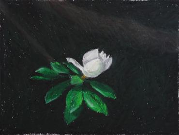 Flower, 2016, oil pastell, 18x24 cm