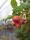 Även trasiga hallon är vackra!