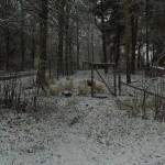 Vitt mot vitt - getter mot snö!