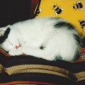 Även Kasper har varit en liten kattunge.