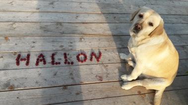 Muddy svarar gärna på frågor om hallonen :)