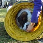 Nix är för stor för att kunna gå igenom tunneln så han får krypa! :)