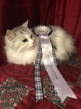Nastasia är nu Grand International Champion!