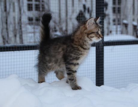 11 veckor och ute för första gången i snön. Det var lite läskigt och jag sprang till mamma.