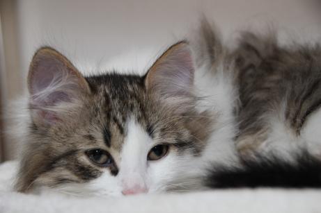 Det är tröttsamt med utevistelse och frisk luft men jag älskar kattgården!