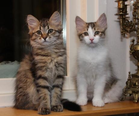Här är jag och brorsan, jag har snart växt om honom!