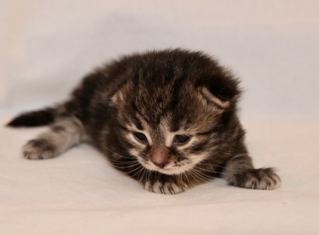 12 dagar gammal och ögonen är öppna