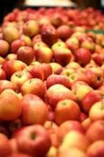 sortering av äpplen