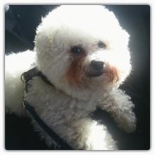 Elvis sitter i bilen och funderar när Husse ska komma ifrån affären.