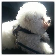 Elvis i profil :)