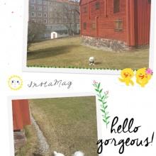 Våren har kommit till Gävle. Här var det vårkänslor! :)