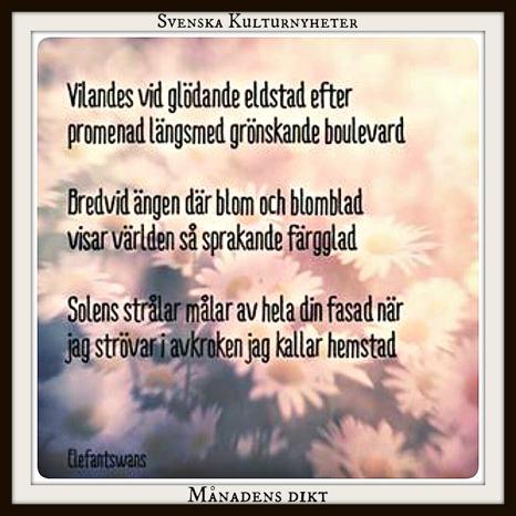 Månadens dikt har @elfantswans på Instagram skrivit. Grattis! :) Klicka på bilden så kommer du till @elefantswans