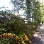 Stenebergsparken i Gävle. Höstliga färger var det här.