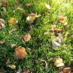 Löven har börjat falla ner.