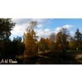 Här kommer bilder från vår fina park i Gävle, Boulognerskogen.