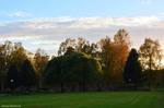 """Söndag 25/9 Örnäsets kyrkogård, Luleå +16 grader ..efter en gråmulen vecka, så verkar det som om solen vill kika fram emellanåt, det är dessutom """"ovanligt"""" varmt idag :) Foto: Carina Marklund"""