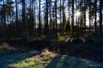 Söndag 30/10 Bredviken, Luleå. -1 grad, sol, frost i gräs och på mark. Foto: Carina Marklund