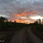 Fredag 19/8 Gullringen Småland. Foto Marie Rosell Växlande molnighet, svag vind +18-22 grader.
