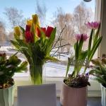 En solig och vacker dag i Gävle.