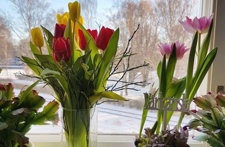 Vårkänslor i Gävle. Bilden är tagen 26 februari 2017 (utsikt från köksfönstret)