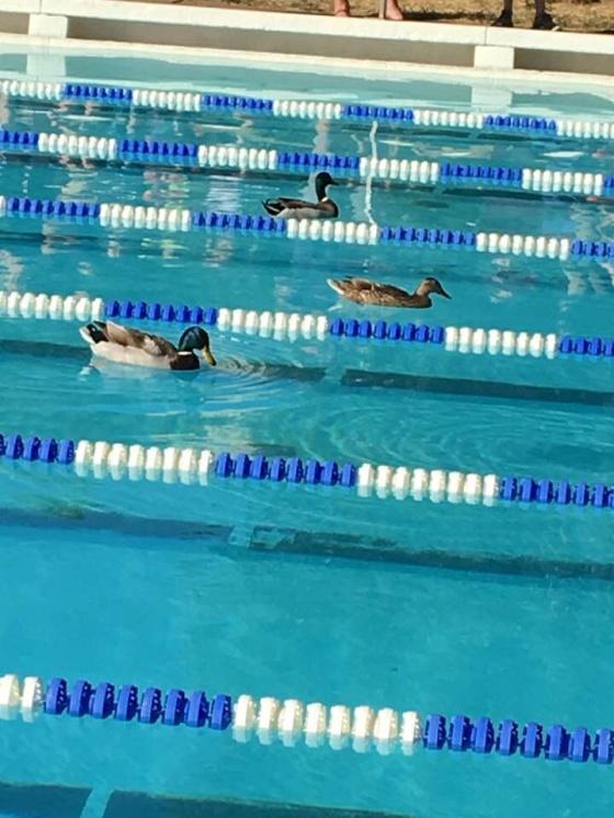 Helgens simbild har vi fått från Solna och Sommardoppet. Tre stycken snabba simmare i på andra femtian på 100m fritt. Tack Lars Reuterskiöld. Den är så vacker så att man nästan blir lite andlig......